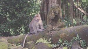 Ubud Tour Monkey Forrest