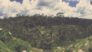 rice terrace visiting