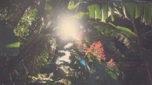 Balinese Nature Tours