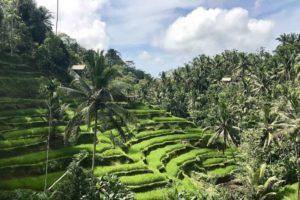 Sightseeing Day trips Bali