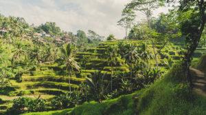 rice paddies tour bali